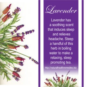 See What Happens When You Start Using Lavender