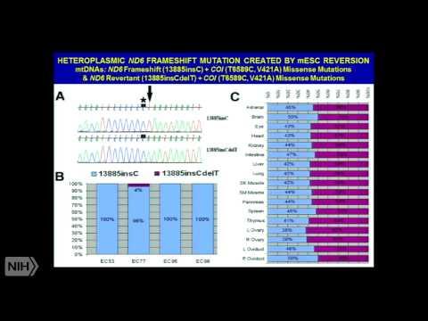 Mitochondrial Etiology of Metabolic & Degenerative Diseases