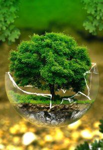 Environmental-Wellness